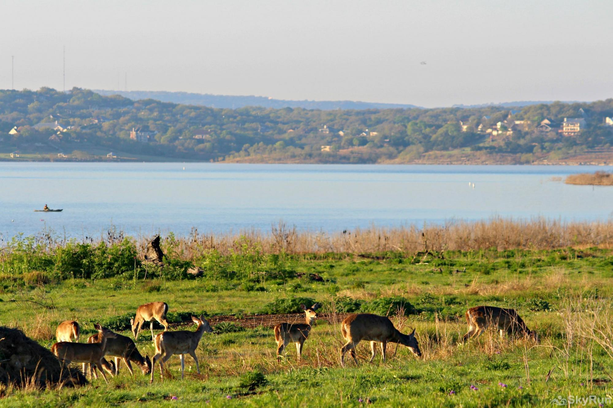 CLOUDFIRE RETREAT Deer Enjoying the Lake Directly Below the Homes