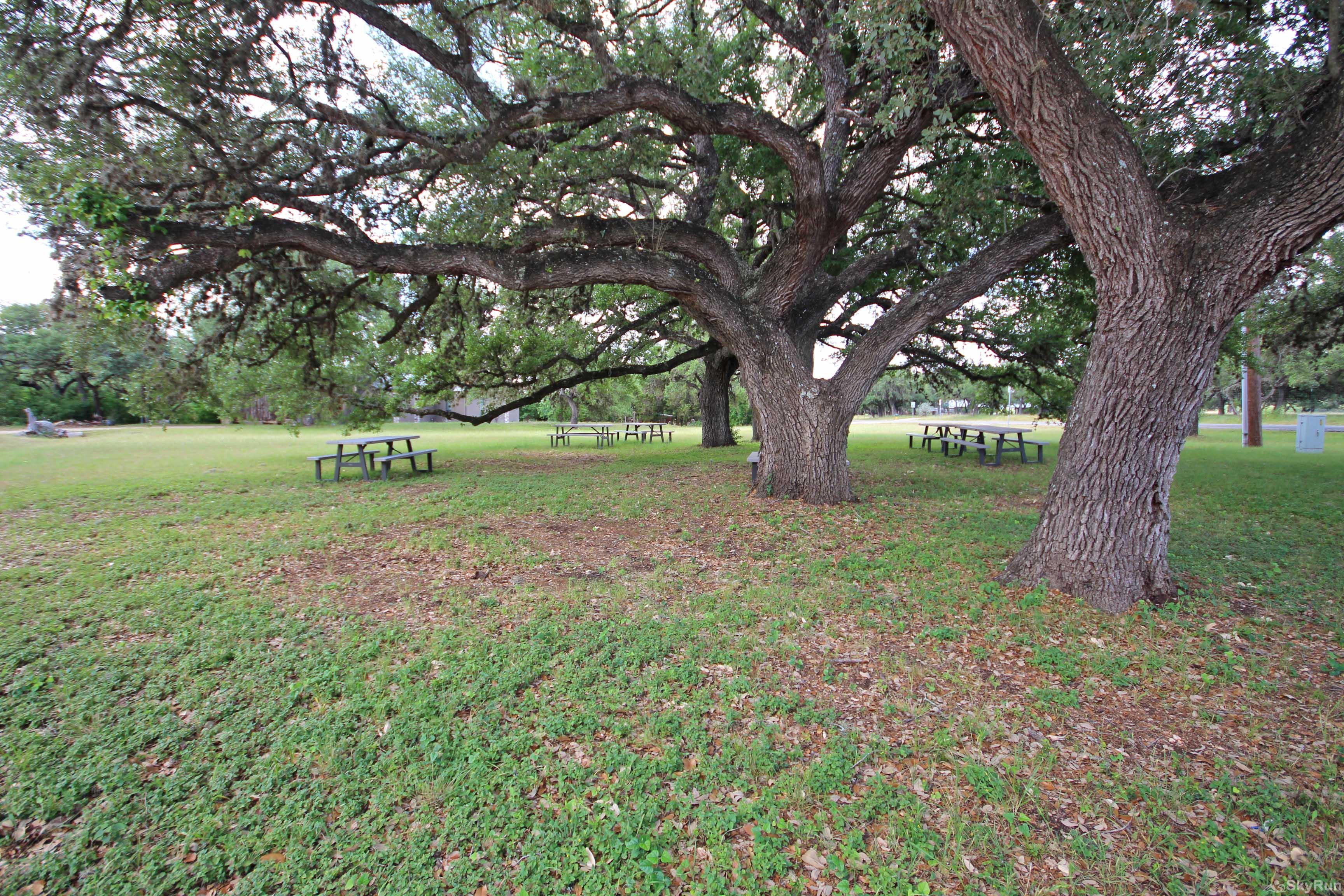 GNARLY GOAT HOUSE Picnic Area Under the Ancient Oaks