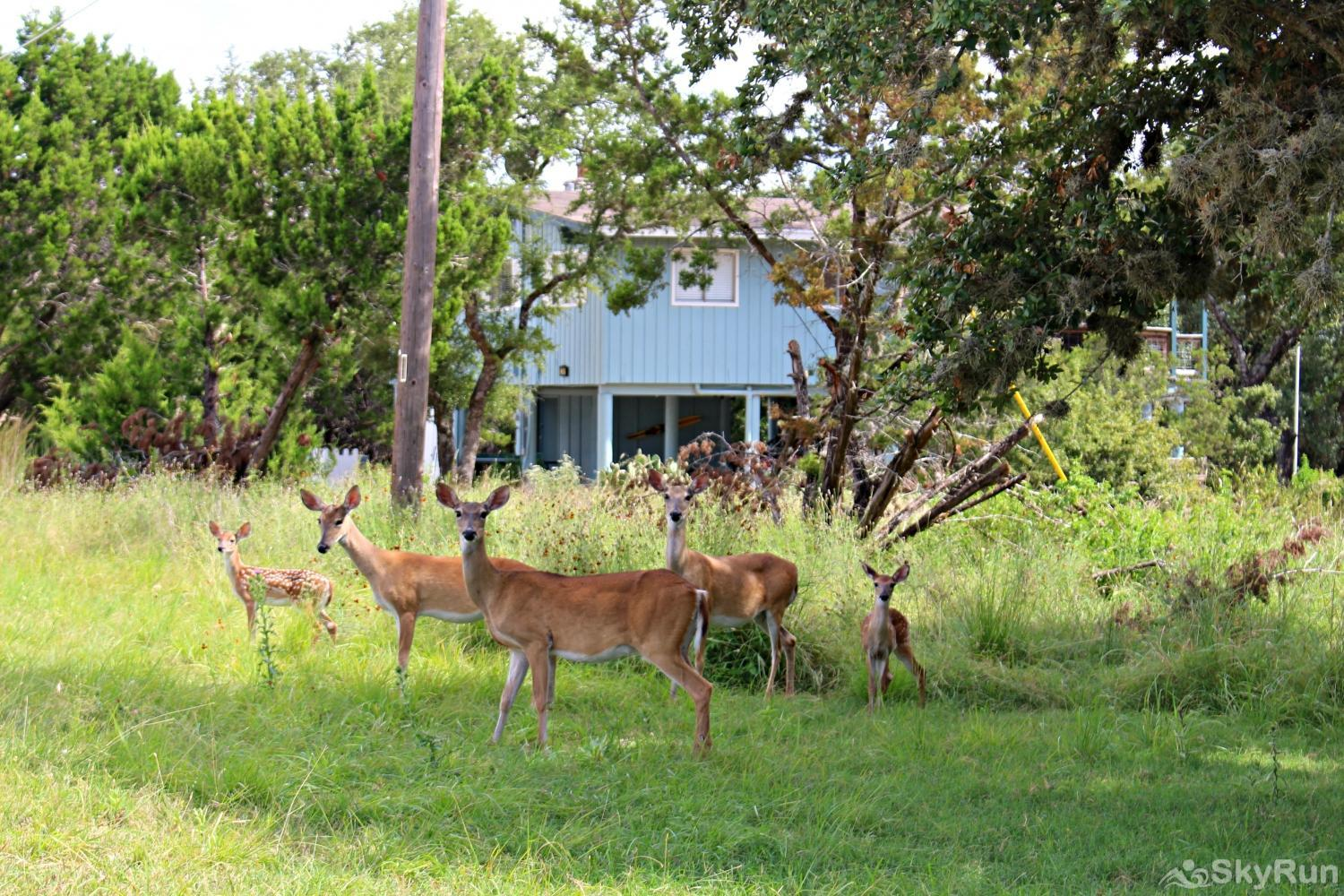 WATER'S EDGE RETREAT You're sure to see whitetail deer roaming the area