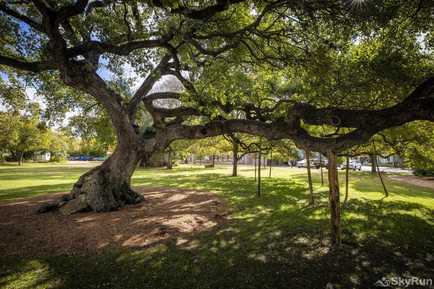 GRUENE GETAWAY Ancient oak trees scattered about